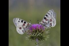 DSA Animal Kingdom 2015 Butterflies