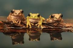 DSA Animal Kingdom 2015 Frogs