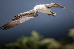 DSA Animal Kingdom 2015 Gull
