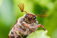 DSA Animal Kingdom 2015 Maybug