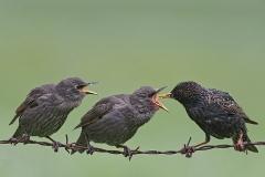 DSA Animal Kingdom 2015 Birds on a Wire