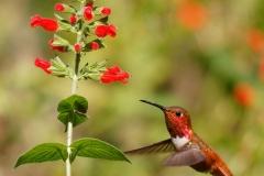 DSA Animal Kingdom 2015 Hummingbird