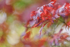 Digital Splash Awards 2018 Autumn Colour